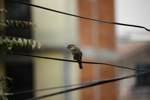 Small bird perched on wire in the city